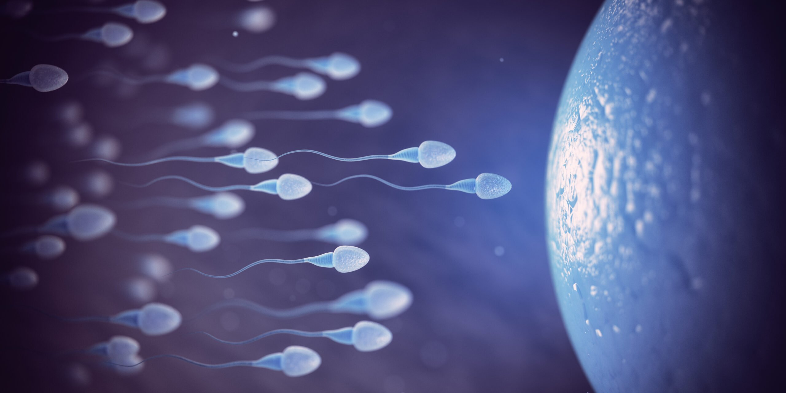 Supplement to Boost Sperm Count